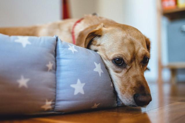 Durchfall-Hund-Ursachen