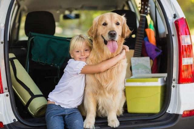 Hund-und-Autofahren
